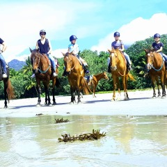 Cape Tribulation Horse Ridies on the Beach