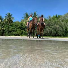 Cape Tribulation Horse riding on the Beach