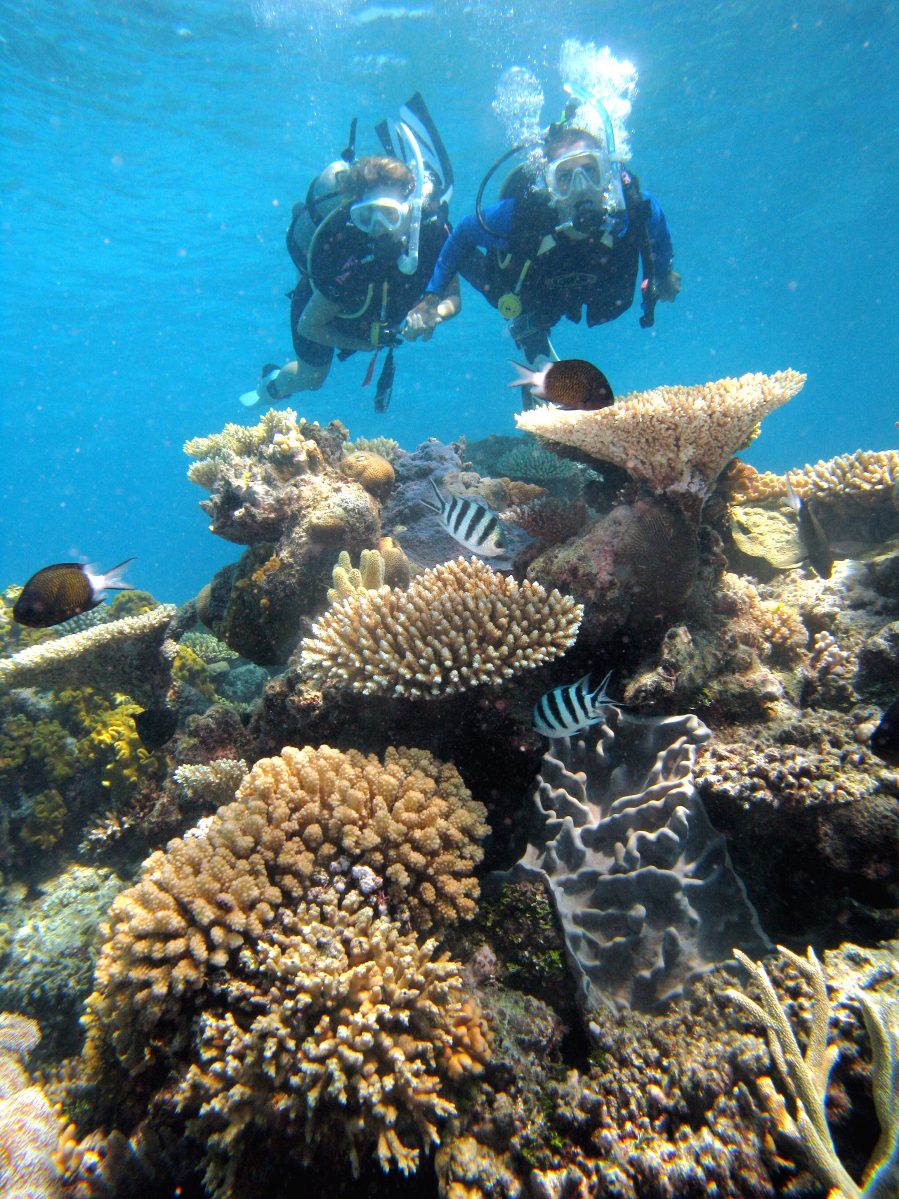 Cairns attractions great barrier reef tours dive snorkel - Dive great barrier reef ...