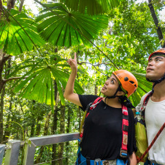 Checking Out The Amazing Rainforest -- Daintree Cape Tribulation Ziplining Tour