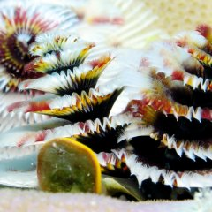 Christmas Tree Worm | 1 Day Snorkel Only Reef Trip | Ex Port Douglas