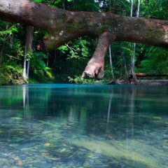 Rivers streams and billabongs of the Daintree & Cape Tribualtion Rainforest