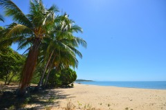 Coconut Palms Line the Beach at Port Douglas