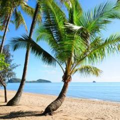 Coconut Trees at Palm Cove