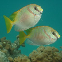 Colourful fish on Great Barrier Reef tours