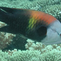 Colourful varieties of fish on Australia's Great Barrier Reef