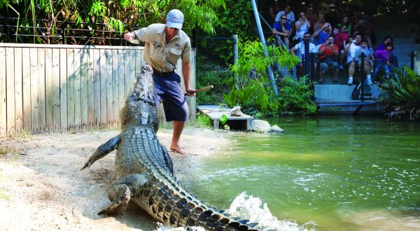 Crazy man hand feeding manhunting crocodile