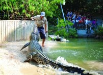Crocodile Farm Tour CIAF Tours
