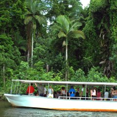 Crocodile spotting tour on the Daintree River
