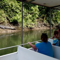 Crocodiles can easily camouflage themselves in the Daintree rivers surroundings