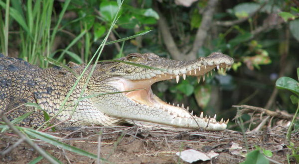 Crocodile Spotting Daintree River Cruise | Full Day Tour | Personalised Tour | Departs Port Douglas