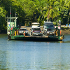 Cross the iconic Daintree River Ferry