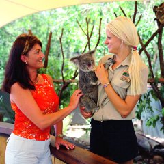 Cuddle a Koala at Hartleys Crocodile Park
