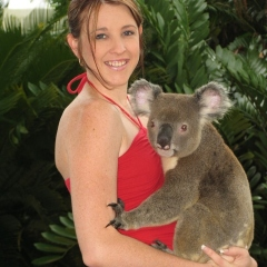 Cuddle A Koala | Koala Photo Souvenir at Rainforestation In Kuranda | Family Day Tour From Cairns