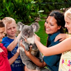 Cuddle a Koala when visiting Kuranda Village