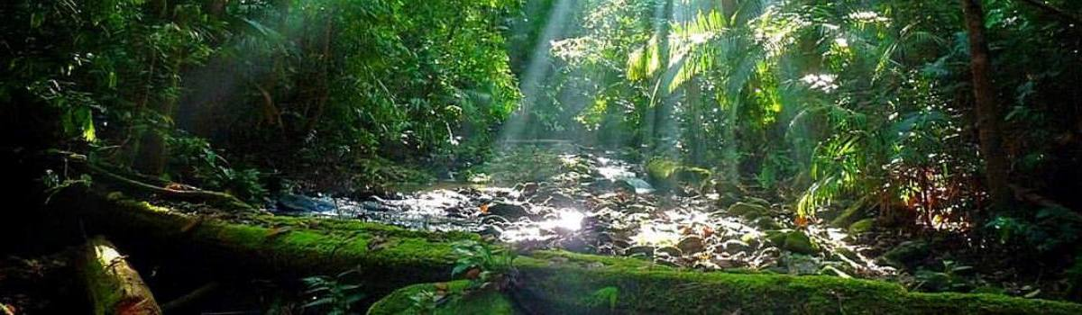 Daily Tours From Cairns To Daintree Cape Tribulation Region & Cape York