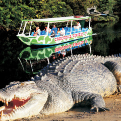 Dainitree River Cruises to Spot Crocodiles