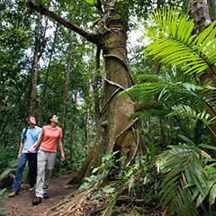 Daintree And Cape Tribulation Rainforest Tours