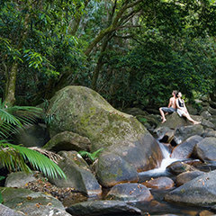 Daintree Cape Tribulation Rainforest tours & attractions