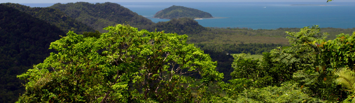 Daintree Cape Tribulation 4WD Bloomfield Track Tours