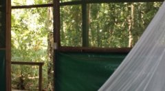 Daintree Crocodylus Tropical Cabin