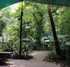 Daintree Crocodylus Village - Daintree Rainforest Accommodation