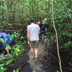 Daintree Dreaming Mangrove walk