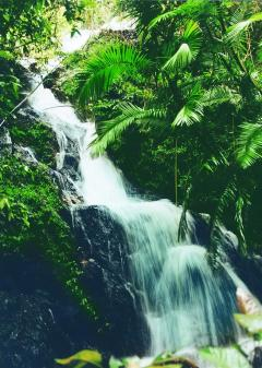 Daintree Eco Lodge | Rainforest Waterfall