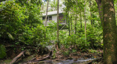 Rainforest Treehouse style accommodation | Daintree Eco Lodge & Spa