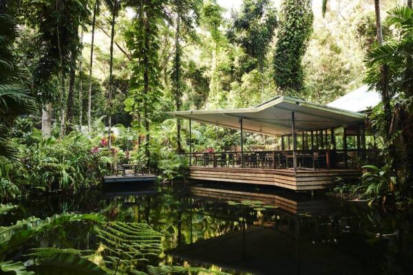 Daintree Ecolodge | Daintree Eco Rainforest Retreat | Luxury Accommodation