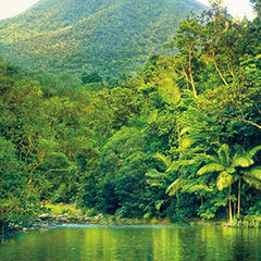 Daintree River Daintree Rainforest