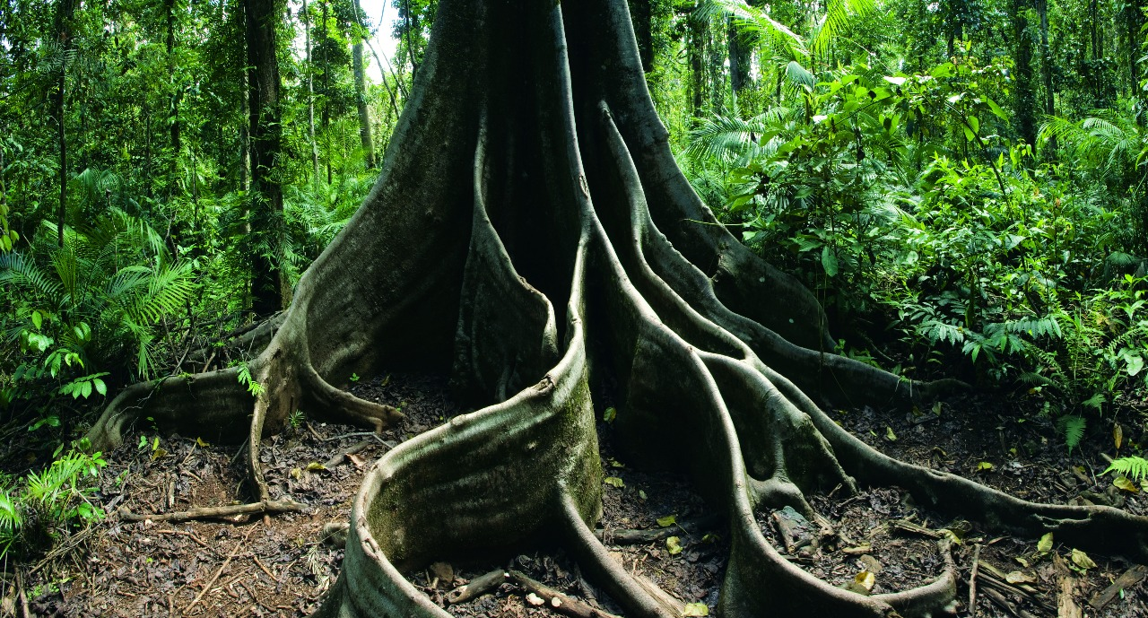 Cairns Attractions Daintree Rainforest Tours Attractions