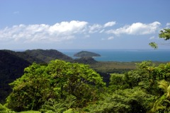 Daintree Rainforest & Cape Tribulation Day Tours From Port Douglas