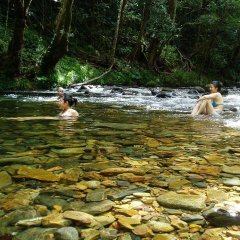 Daintree Rainforest Cape Tribulation | Full Day Tour Ex Port Douglas Tropical North Queensland