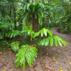 Daintree Rainforest Private Charter Ex port Douglas
