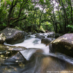 Daintree Rainforest Stream - Aboriginal Cultural Tour