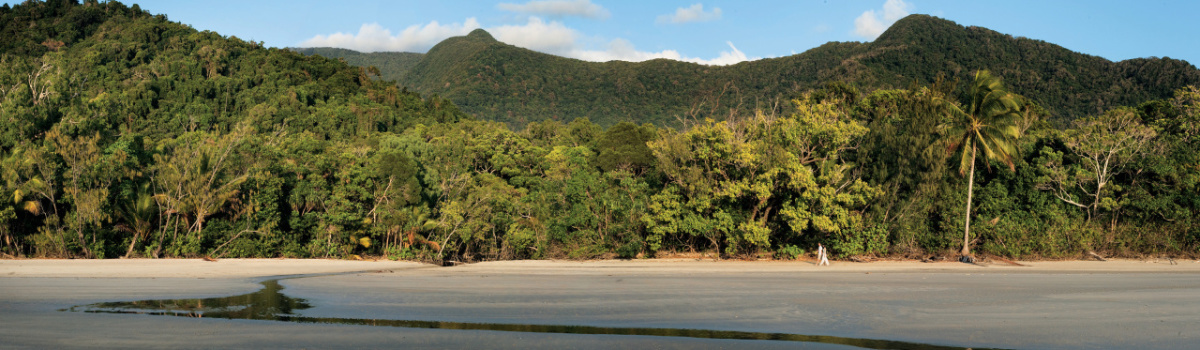 Daintree Rainforest Tours - Cape Tribulation - 4WD Bloomfield Track Tours