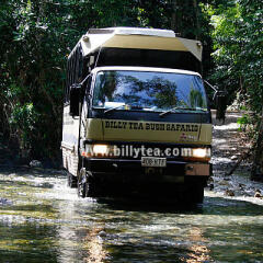 Daintree Rainforest Tours - Luxury 4WD Small Group Tours