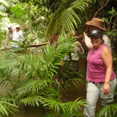 Daintree Rainforest Walk | Small Group | 1 Day Tour From Port Douglas North Queensland