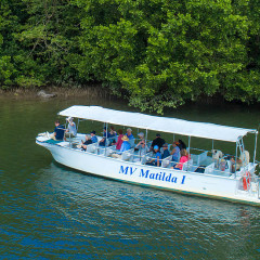 Daintree River crocodile spotting cruise