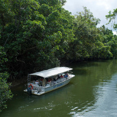 Daintree River Cruise - Spotting wildlife