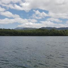 Daintree River Cruise | Afternoon Private Charter