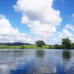 Daintree River Cruise Afternoon Private Charter Ex Port Douglas
