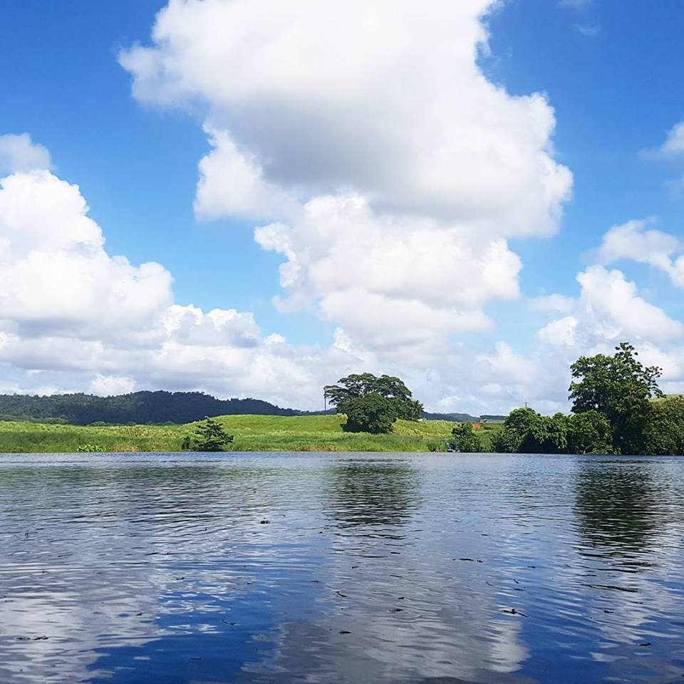Daintree River Amp Cassowary Falls Morning Private Charter