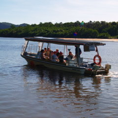 Daintree River cruise searching for wild animals on half day tour
