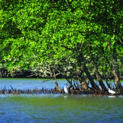 3 Day 2 Night Cooktown | Daintree River Cruise