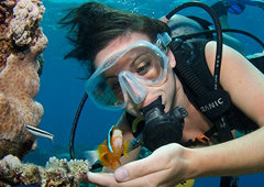 Snorkel & Dive Tours Cairns
