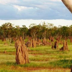 Termites Mounds | Discover The Atherton Tablelands In Tropical North Queensland