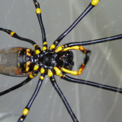 Discover The Daintree Rainforest & Its Inhabitants On A Private Tour | Golden Orb Weaver Spider | Tropical North Queensland