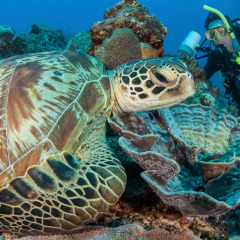 Discover The Great Barreir Reef Marine Life On A Liveaboard Expedition
